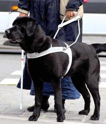 hond3vdb